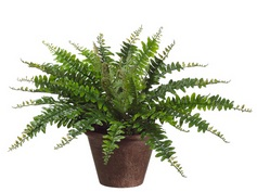 14in silk boston fern