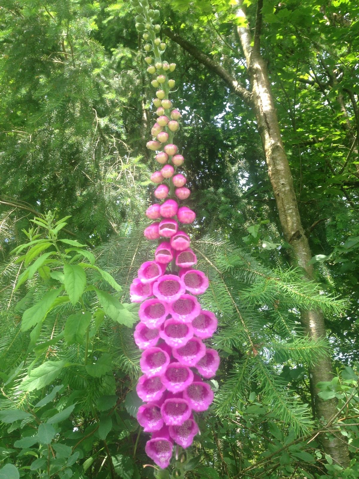 Wild Flower - Langley, BC