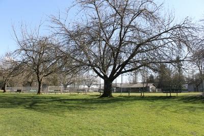 Bocce ball behind beautiful tree