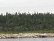 Canso, Guysborough County Nova Scotia Oceanfront Land for sale:    (Listed 2012-07-13)