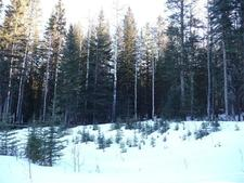Water Valley Country Residential Land for sale, Rural Mountain View County Land : (Listed 2017-02-07)