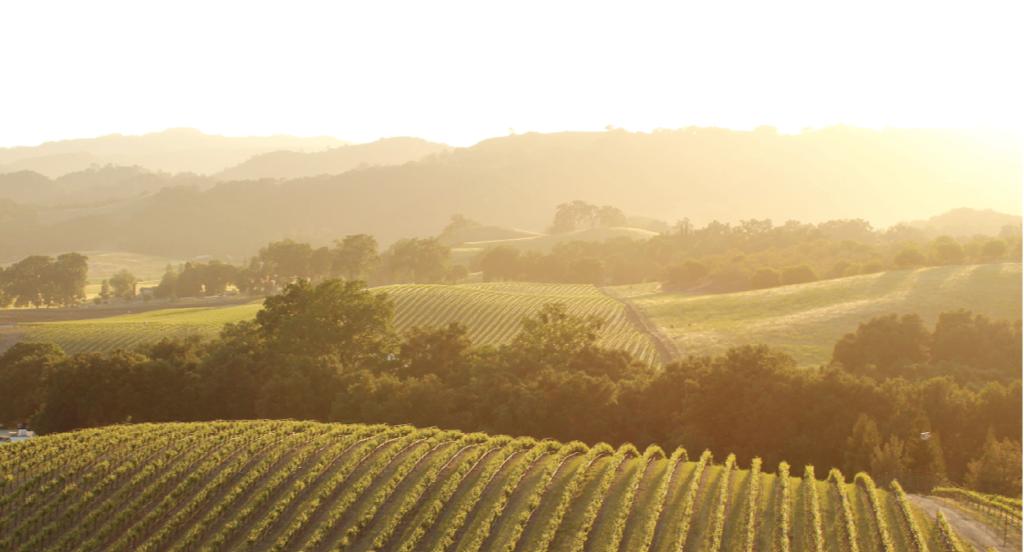 opolo vineyard_sunset_Ma319.png