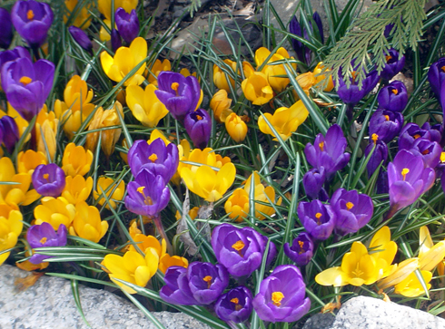 flowers-on-spring-almaguin-highlands.jpg