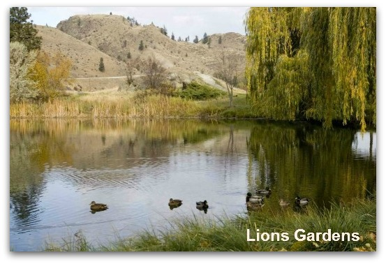 Lions Gardens
