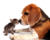 Picture of Dog and Cat signifying pet friendly building