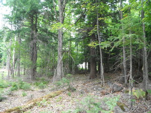 Magnetawan Lot for Sale close to Lake Cecebe
