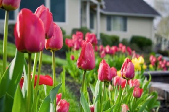 Spring flowers - cropped.JPG
