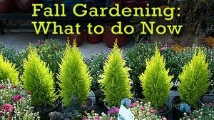 Fall Gardening:  What To Do Now